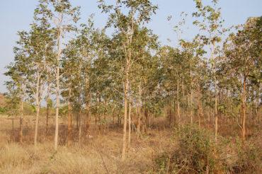 Tree-Plant